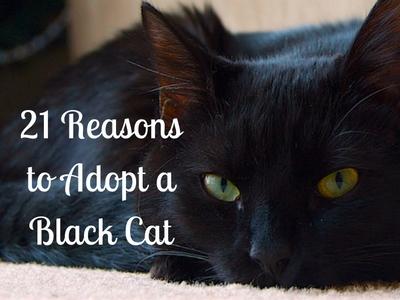 Adopt a Black Cat!