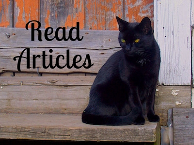 Black Cat Articles