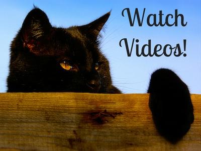 Watch Black Cat Videos